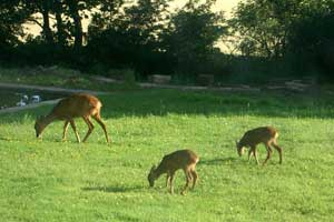 Photo of deer