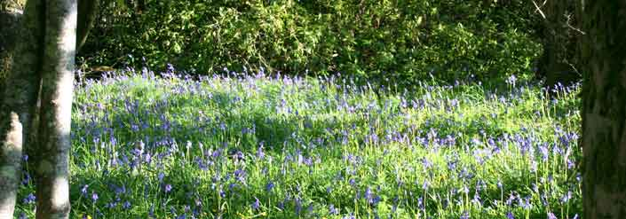 Oatfield House - Bluebells in May